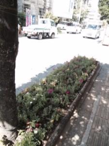 お花 (3)